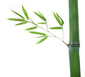 Bamboo with green branch isolated on white Royalty Free Stock Photos