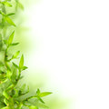 Bamboo and green leaves, background Royalty Free Stock Photo