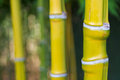 Bamboo green in the nature with good bokeh Royalty Free Stock Images
