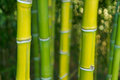 Bamboo green in the nature with good bokeh Royalty Free Stock Photo