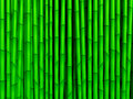 Bamboo green texture Royalty Free Stock Image