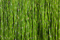 Bamboo grove Royalty Free Stock Image