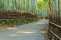 Bamboo Grove at Arashiyama in Kyoto Royalty Free Stock Photo