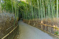 Bamboo grove at arashiyama in kyoto chikurin no michi Royalty Free Stock Photos