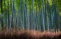 Bamboo grove in arashiyama kyoto japan green Royalty Free Stock Photo