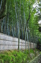 Bamboo grove japanese in kyoto Royalty Free Stock Images