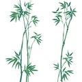 Bambus ilustrácie