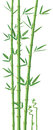 Bamboo illustration detailed vector for best prints and other us Royalty Free Stock Image