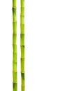 Bamboo isolated on white Royalty Free Stock Photo