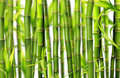 Bamboo jungle background Stock Photo