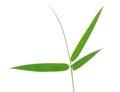 Bamboo Leaf Isolate On White B...