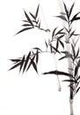 Bamboo leaf Royalty Free Stock Photo