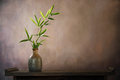 Bamboo leaf in vase Royalty Free Stock Photo