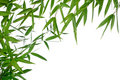 Bamboo- leaves Stock Images