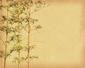 Bamboo on old grunge antique paper Stock Photo