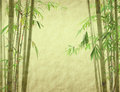 Bamboo on old grunge antique paper Royalty Free Stock Photo