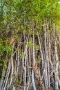 Bamboo poles. Royalty Free Stock Photo