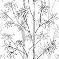 Bamboo Seamless Pattern Royalty Free Stock Photo