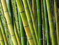 Bamboo Shades Royalty Free Stock Photography