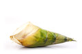 Bamboo shoot on white background fresh Royalty Free Stock Images