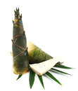 Bamboo shoot on white background and leaf Stock Images