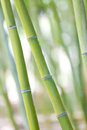 Bamboo shoots close up of green beautiful at japanese garden Royalty Free Stock Photos