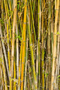 Bamboo stalks tropical forest Stock Photo