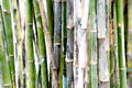 Bamboo stems Royalty Free Stock Photo