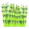 Bamboo sticks Royalty Free Stock Photo