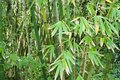 Bamboo Sticks Forest Royalty Free Stock Photo