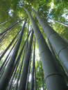 Bamboo taken in the tokyo area of japan Stock Photo