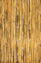 Bamboo texture golden arranged as the background fabric wall Stock Images