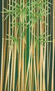Bamboo thickets Stock Images