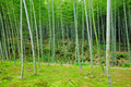 Bamboo tree Royalty Free Stock Photos