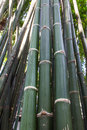 Bamboo tree nature green wood Stock Images