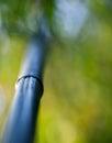 Bamboo tree trunk macro pretty light Royalty Free Stock Images