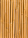 Bamboo tree trunks Royalty Free Stock Photos