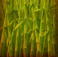 Bamboo trees Royalty Free Stock Image