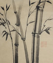 Bamboo trees painted in Indian ink