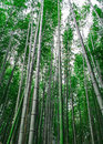 Bamboo trees scenery along the pathway in Arachiyama, Kyoto Stock Image