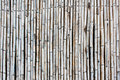 Bamboo trunk surface and texture stock photo Royalty Free Stock Images