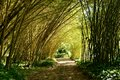 Bamboo tunnel grove in allerton garden poipu kauai hawaii usa Stock Images