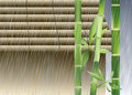Bamboo under the rain Stock Image