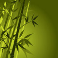 Bamboo, vector Stock Image