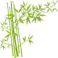 Bamboo, vector Royalty Free Stock Photography