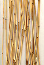 Bamboo vertical Royalty Free Stock Image