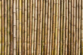 Bamboo wall the of the Royalty Free Stock Images