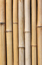 Bamboo wall close up of Royalty Free Stock Photography
