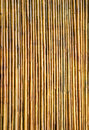 Bamboo wall texture background Royalty Free Stock Photo