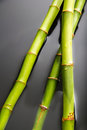 Bamboo with water Royalty Free Stock Photo